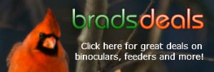 Birdwatching Deals and Online Coupons
