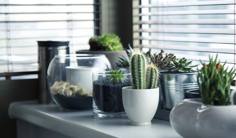 3 Pretty Plants Even You Can't Kill