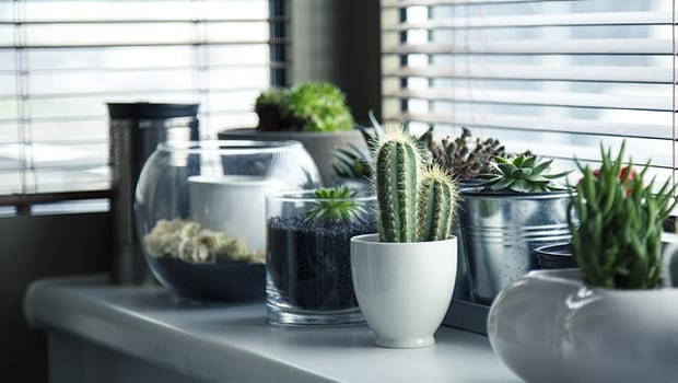 The Top 3 Plants Even You Can't Kill