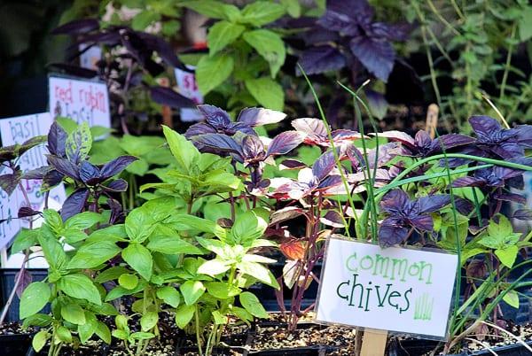 Farmers' Market Herbs