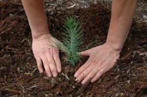 Plant a Tree to Save Energy