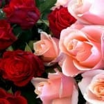 Skip Surge Pricing on Valentine's Day Roses: Order Now for 2/14 Delivery