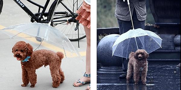 dog-umbrella