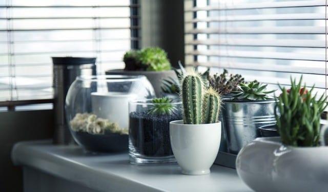 5 Pretty Plants Even You Can't Kill