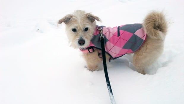 Molly snow