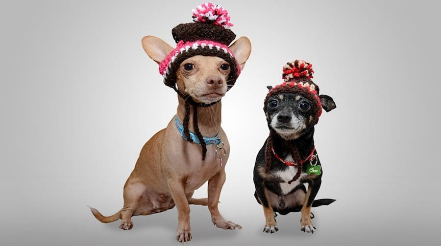 5 Adorable Styles for Your Pet to Rock this Winter