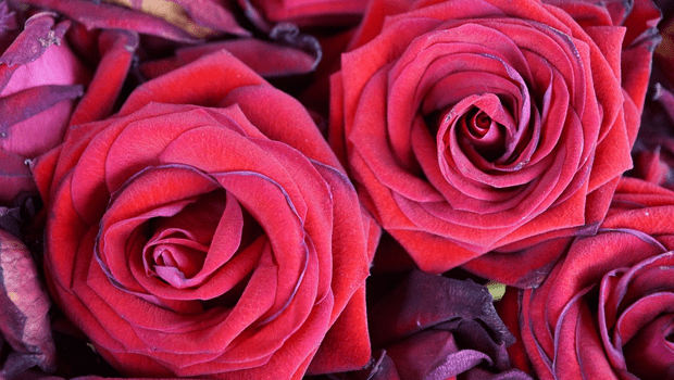 PSA: The Annual Price Gouging for a Dozen Roses Has Begun!