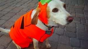 5 Adorable Halloween Costumes for Your Dogs, Cats and Hamsters