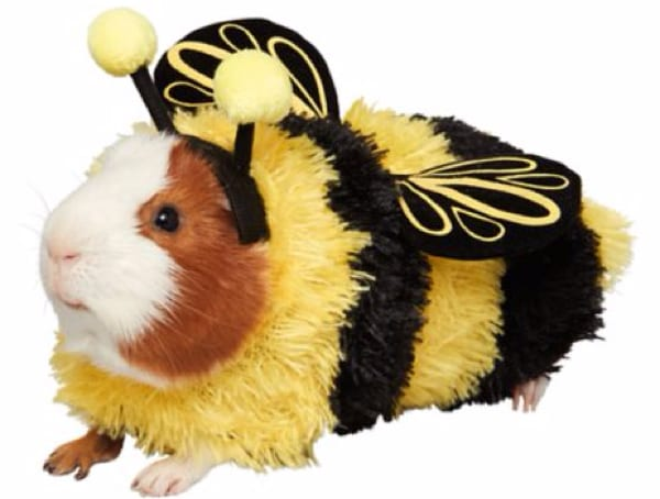 Guinea Pig Bumble Bee Costume