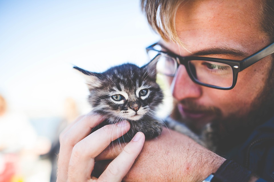 man-kitten-pet-gift-guide