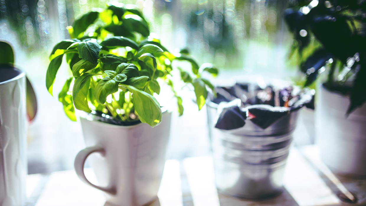 Is It Cost-Effective to Grow Your Own Herbs?