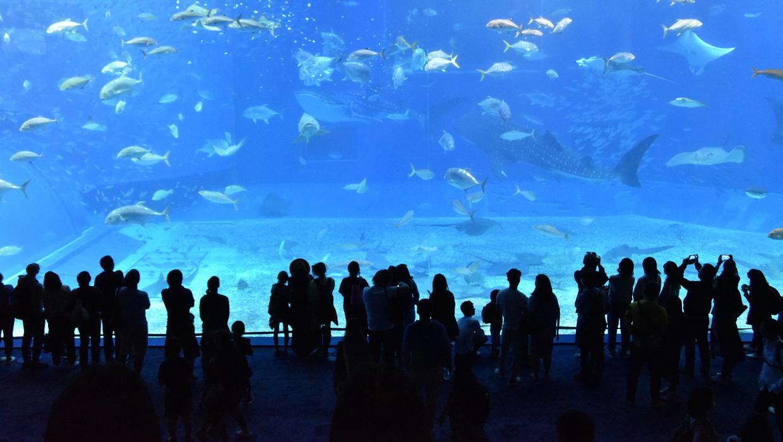 Churaumi aquarium 2407812 1920