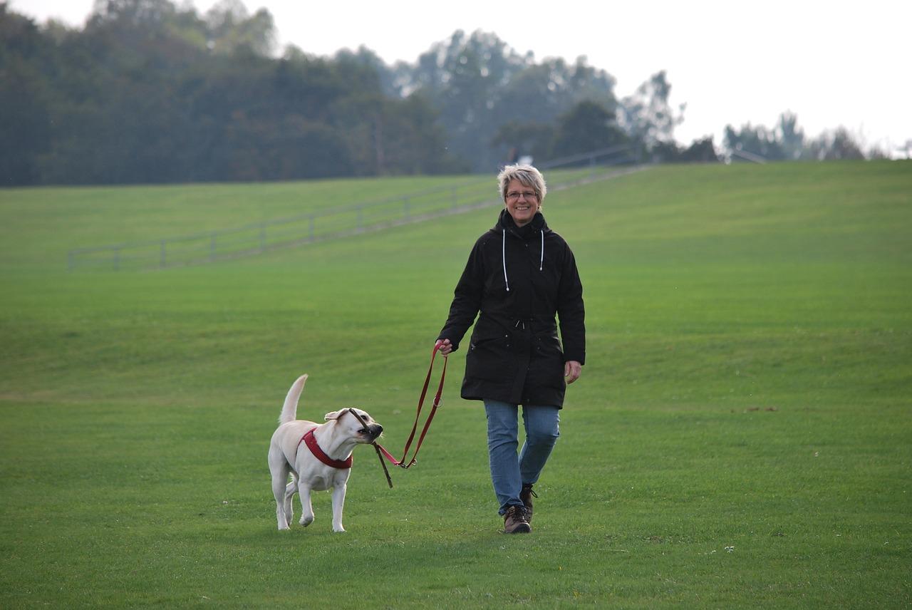 dog-walking-job
