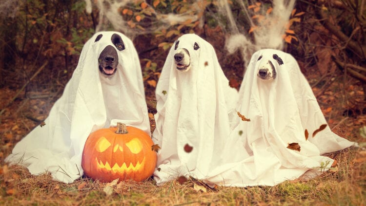 Cutest cheap pet costumes