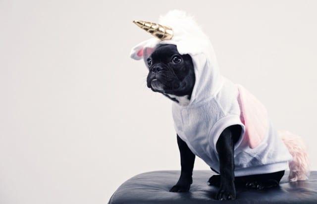 unicorn costume for dog