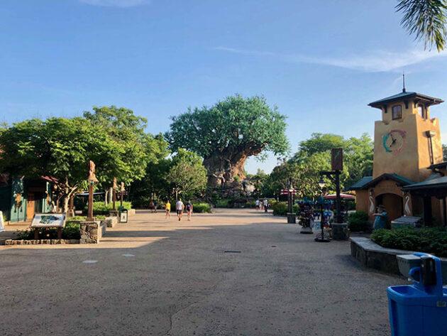 Visiting Disney World's Animal Kingdom after Reopening