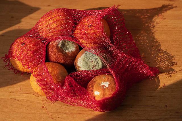 Bag of rotten oranges
