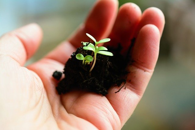 plant growing in hand